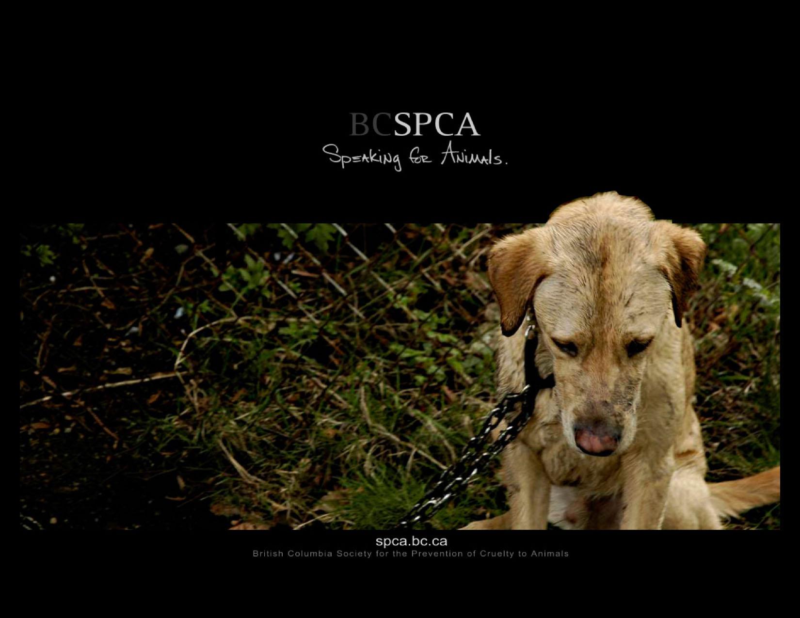 BCSPCA